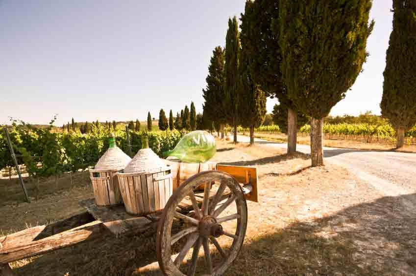 ambiente mediterran weinbau in italien