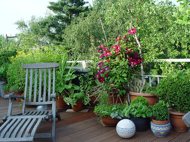 clematis terrasse balkon ambiente mediterran. Black Bedroom Furniture Sets. Home Design Ideas