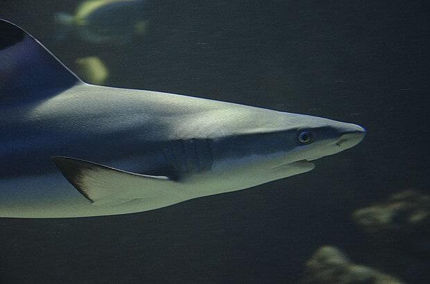 das Bild zeigt einen Hai im Aquarium