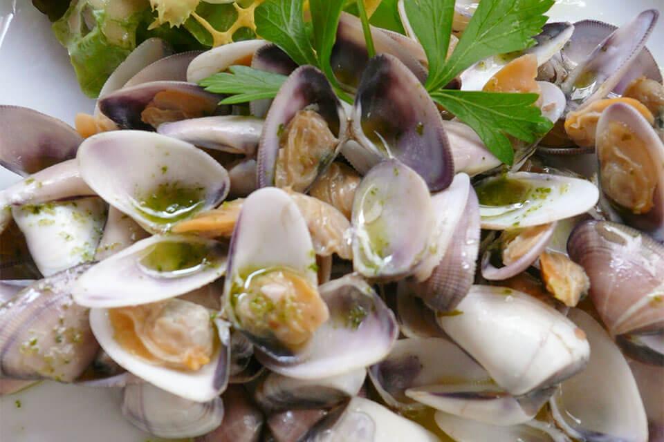 das Bild zeigt die zart-violett und cremefarbenen Muscheln Tellines