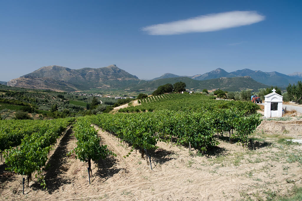 Weinbau im Nemea-Tal auf dem Peleponnes in Griechenland
