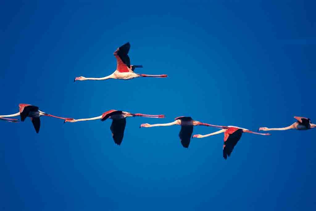 Camargue – zwischen Land und Meer ein Paradies für Flamingos