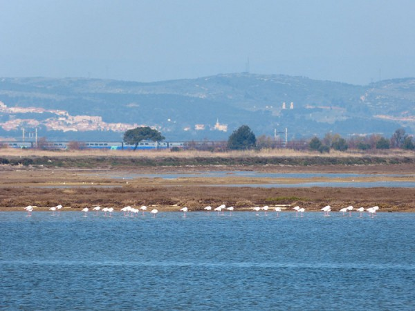 web_train-etang-flamandsroses
