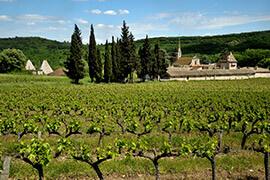 Urlaub zwischen Weinreben im Departement Gard © ADRT - Bernard Liegeois