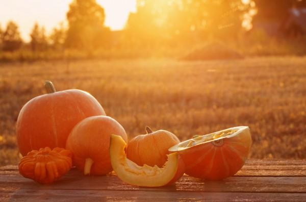 Kuerbis Herbst © Maya Kruchancova