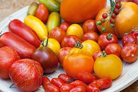 Tomatenvielfalt © Ulmer Verlag