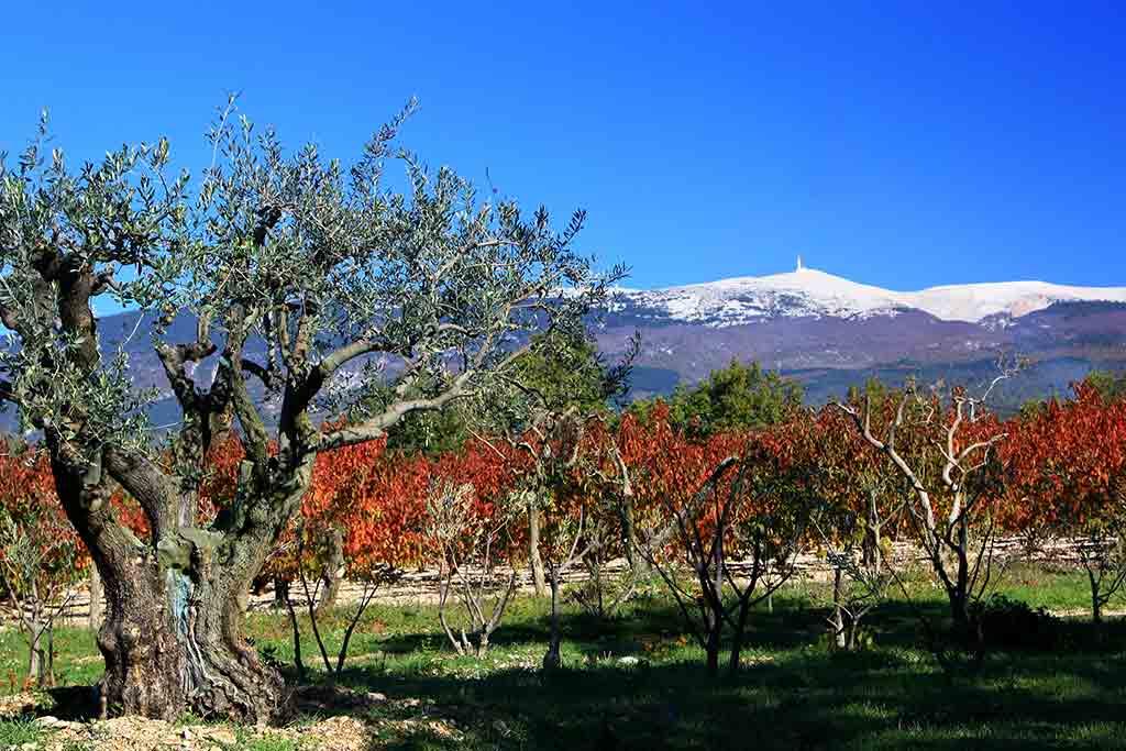 Die Herbstsonne bringt die Farben der Provence zum Leuchten.