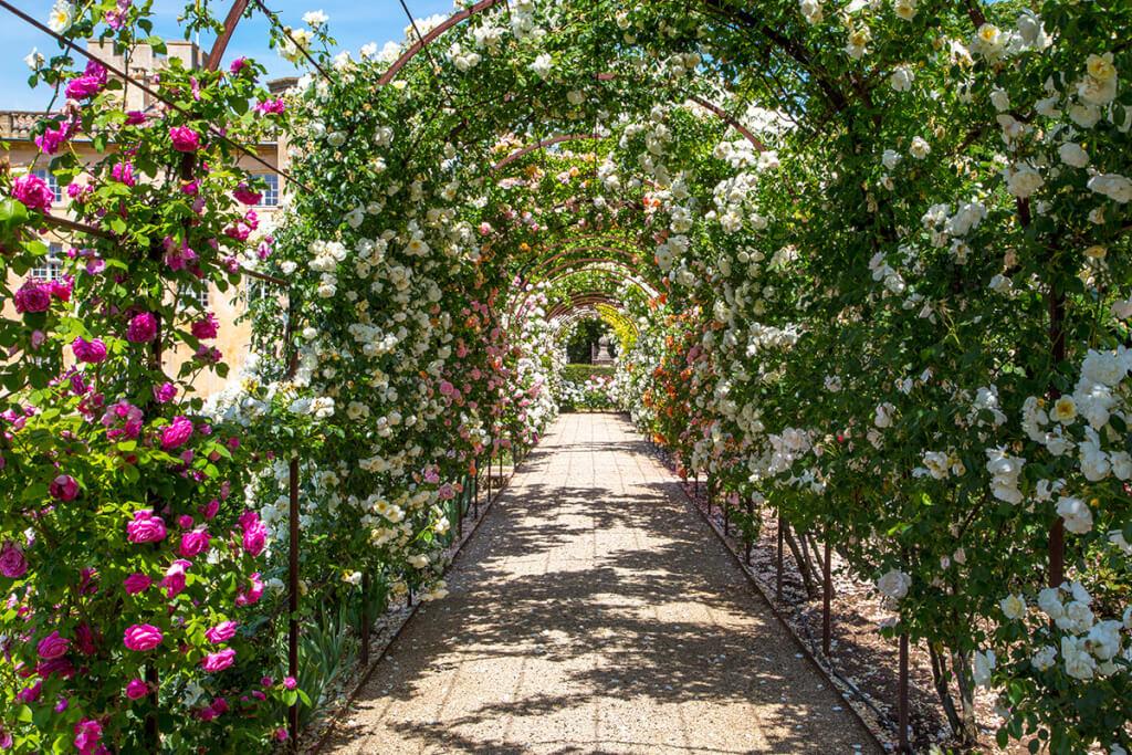 Rosenspalier in der Villa Baulieu © Sophie Spiteri