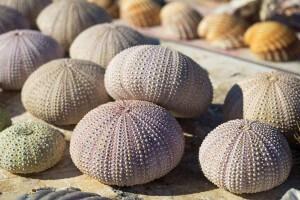 Bunte Muscheln am Strand am Mittelmeer