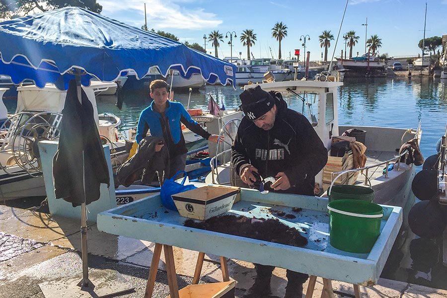 Frische Seeigel-Delikatessen direkt vom Fischer