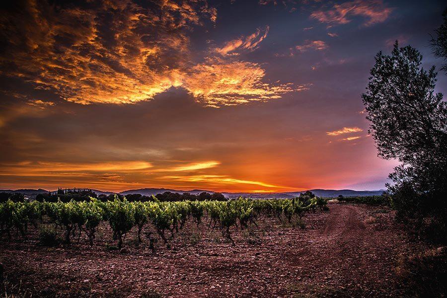 Wein-Wochenende und Campen bietet