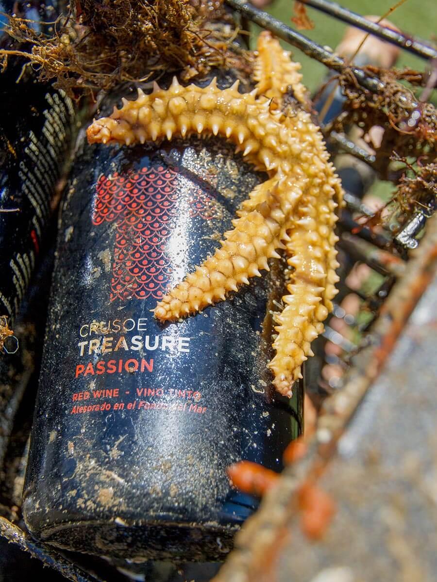 Auch Seesternen scheinen die Unterwasserweine zu gefallen © Bodega Crusoe Treasure