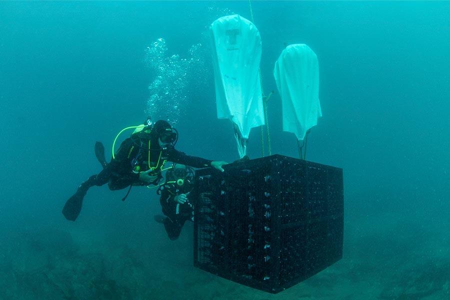 Vorsichtig werden die Flaschen und auch Fässer im Meer versenkt