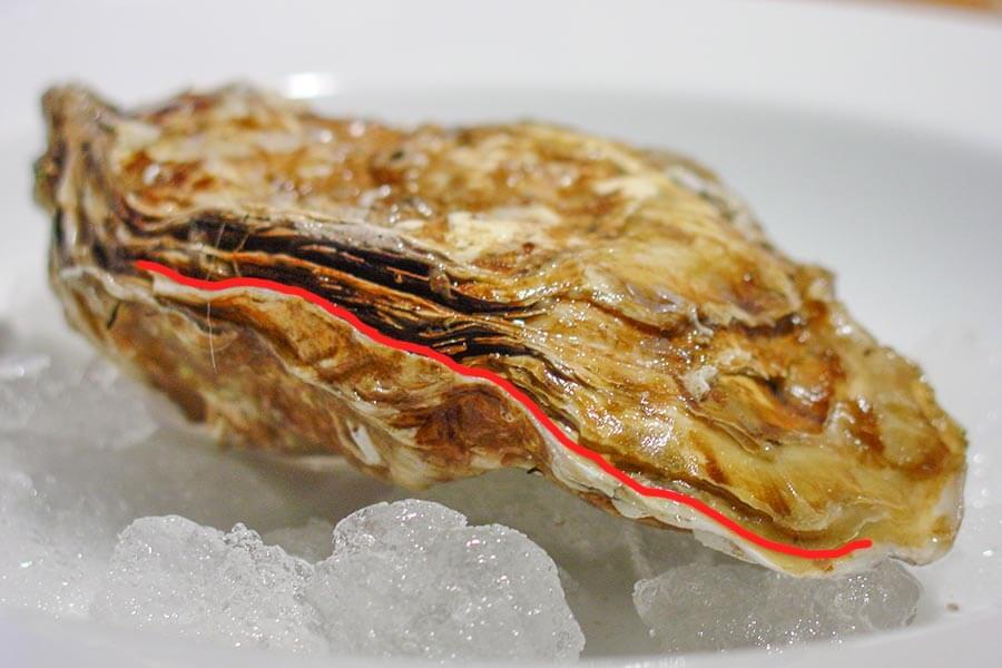 Auster mit roter Linie, die beide Schalenhälften anzeigt © Siegbert Mattheis