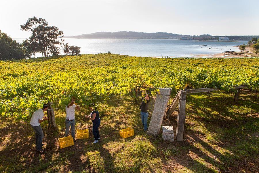 Auch am Atlantik wie hier an der Ruta do Vino Rías Baixas gedeiht Wein © Predif