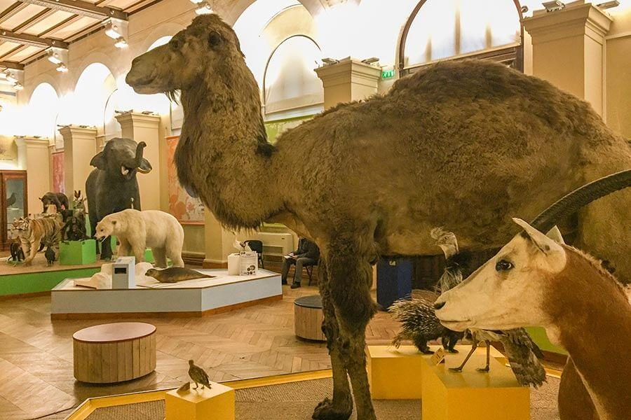 Ausgestopfte Tiere im Naturhistorischen Museum