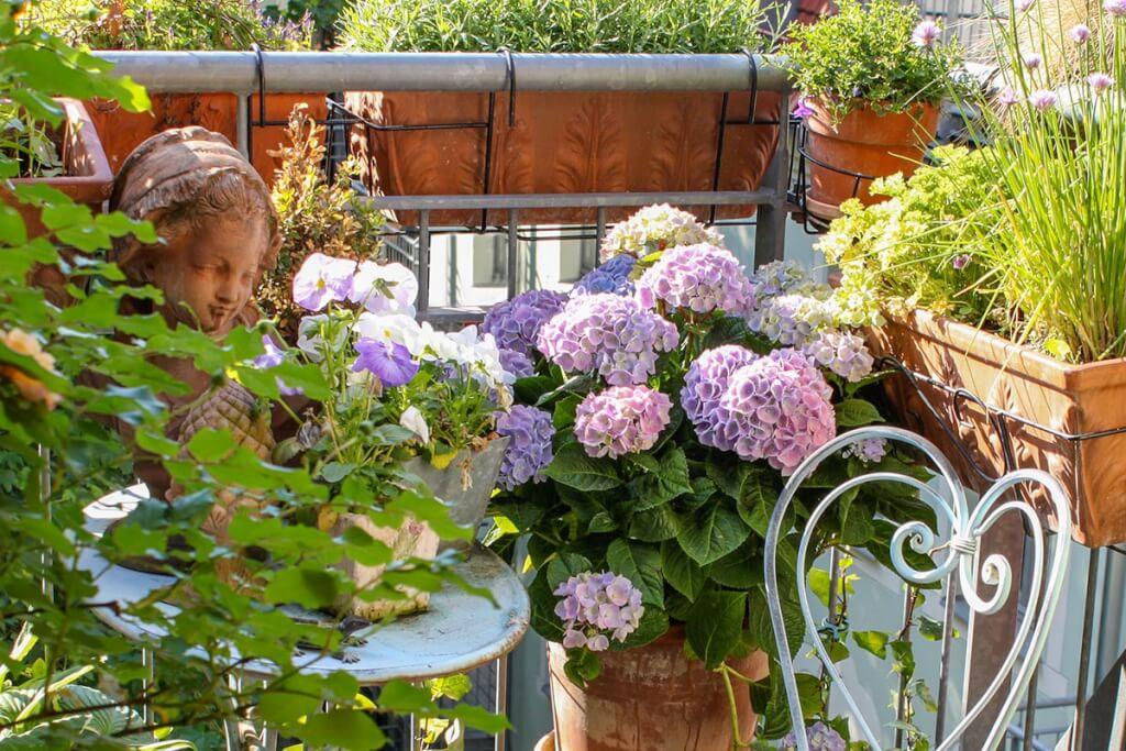 Hortensien lieben Halbschatten, perfekt für den Balkon © Siegbert Mattheis