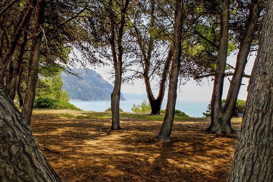 Pinienhain am Strand bei Ogliastro Marina © Siegbert Mattheis