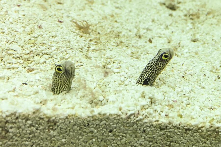 Unterwasser-Seewürmer © Siegbert Mattheis