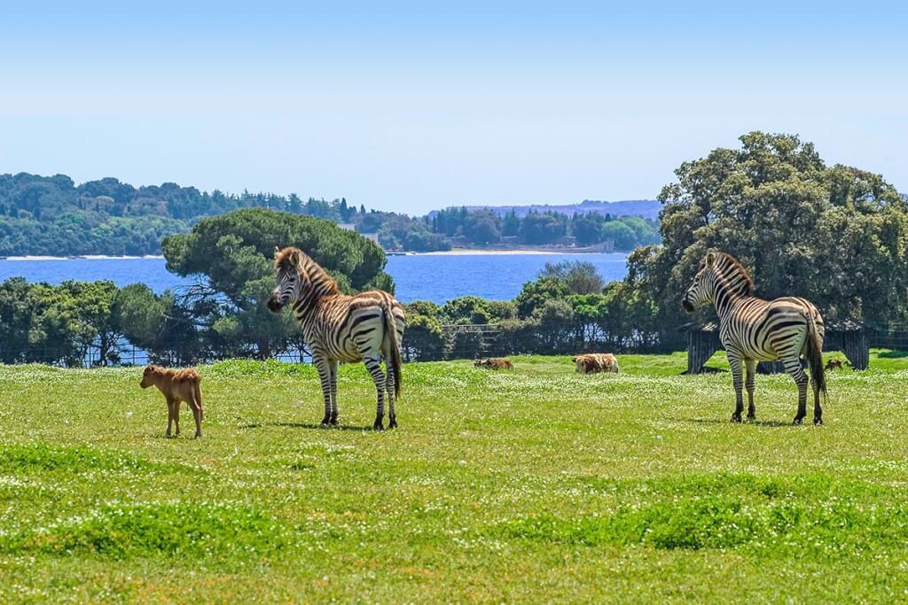 Elefanten, Lamas, Zebras, heilige indische Kühe, Esel und Strauße uvm. tummeln sich friedlich im Safaripark © Petr blaha
