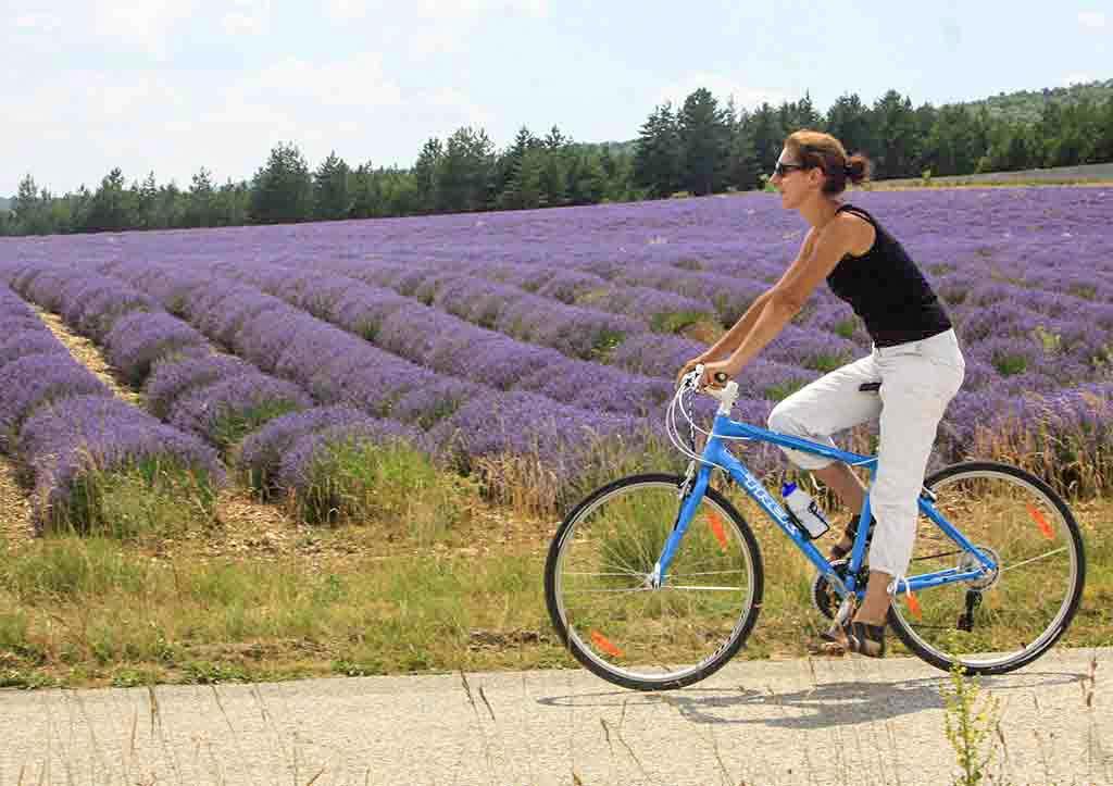 Provence Urlaub: Blühende Lavendelfelder im Frühsommer © A. Hocquel