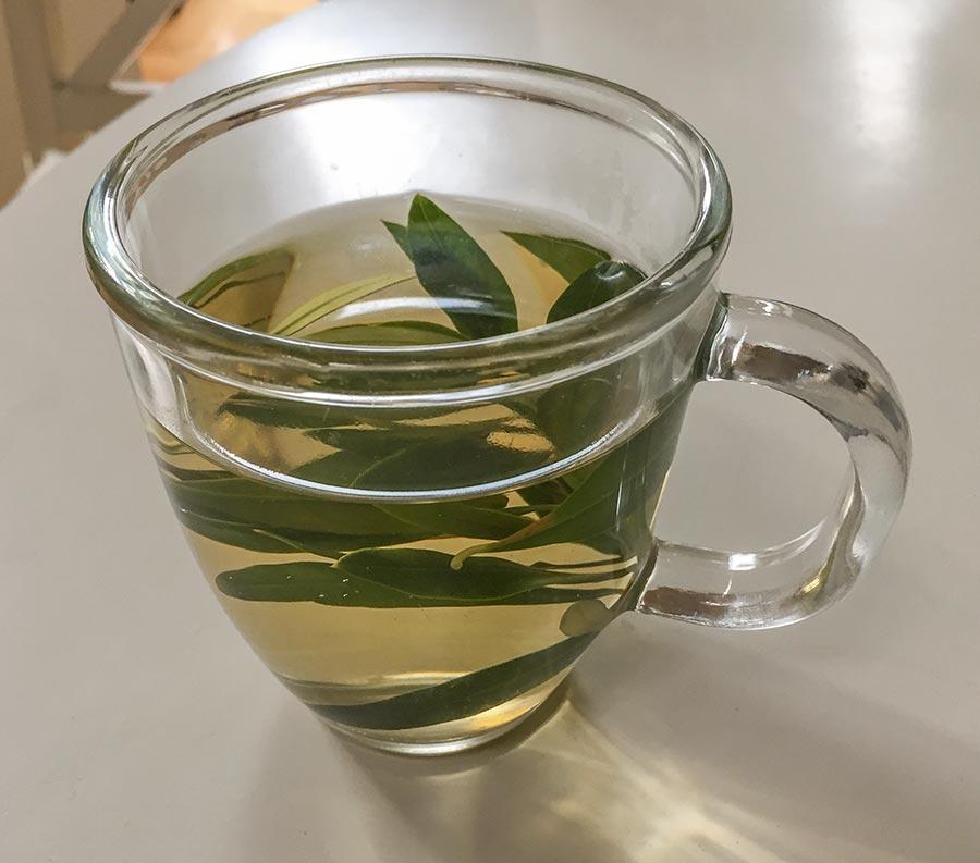 Tee aus Olivenblättern stärkt das Immunsystem © Siegbert Mattheis