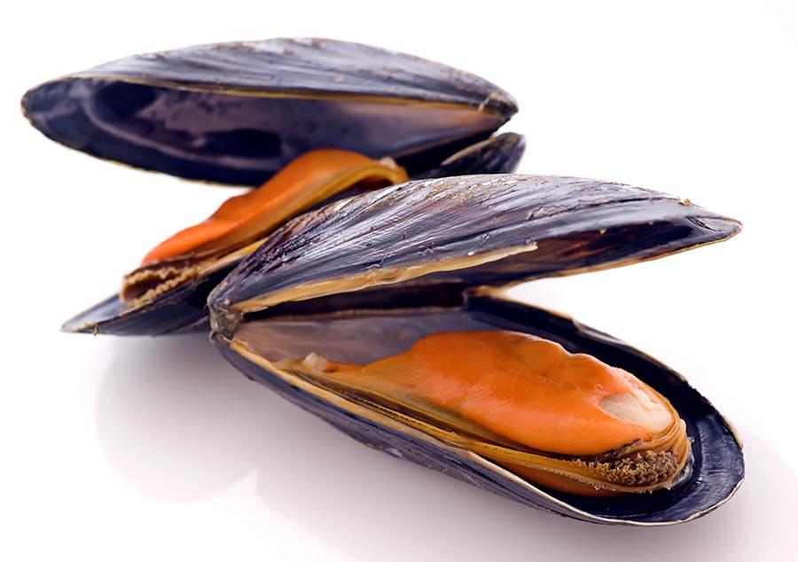 Muscheln kochen geöffnet