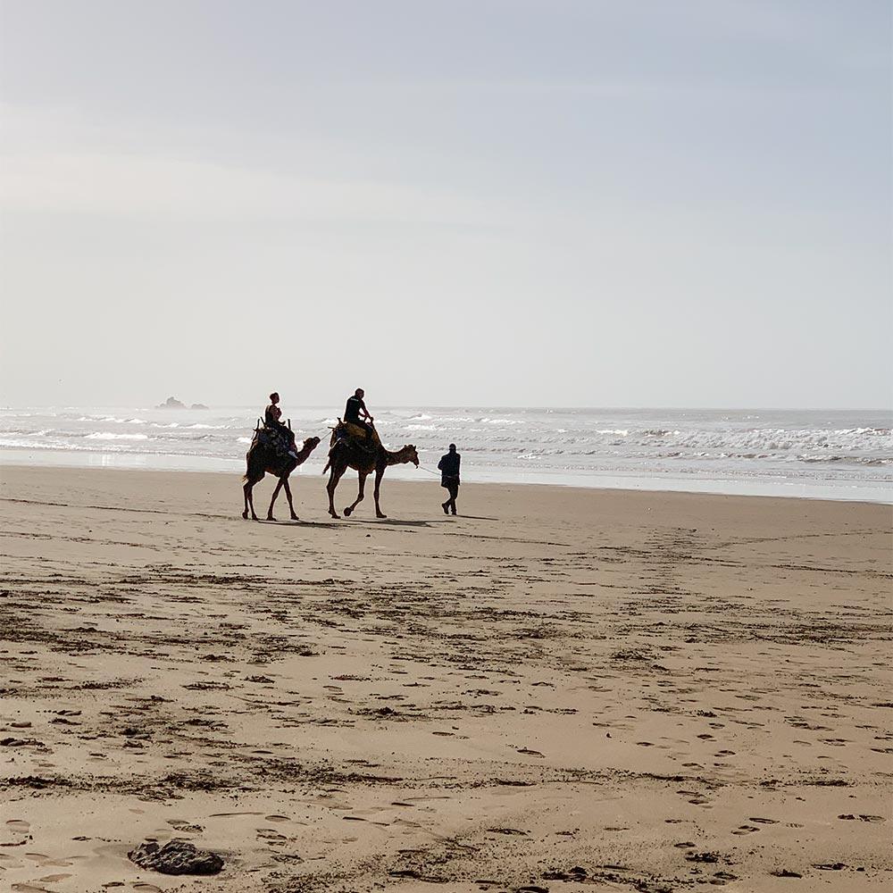 Ausritt auf Kamelen am Strand