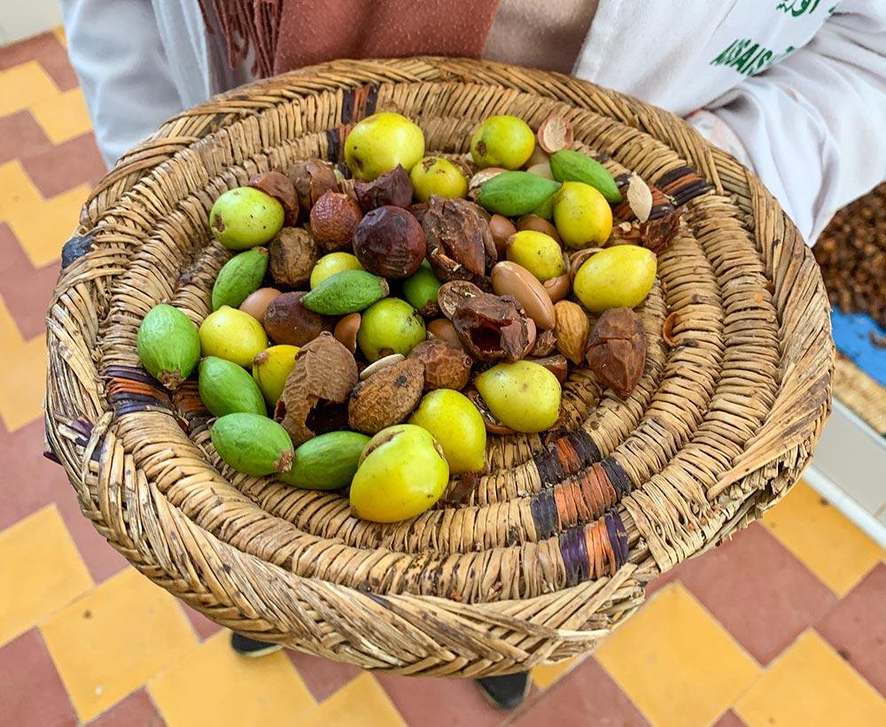 Die Früchte des Arganbaums in unterschiedlichen Reifegraden