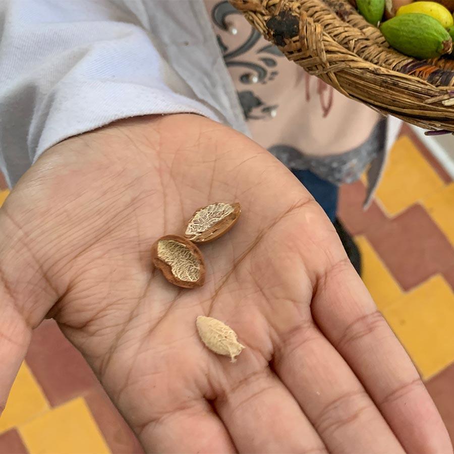 Eine aufgeschlagene Nuss mit dem Samenkern © Siegbert Mattheis