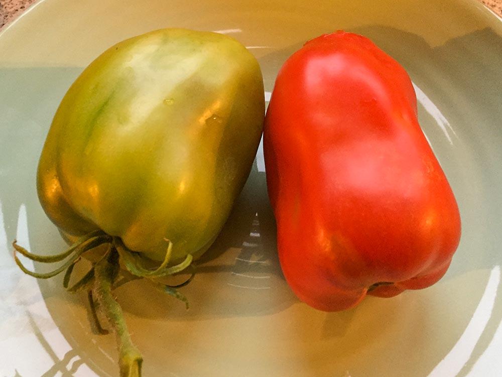 Die Sorte Andine Cornue, links natürlich noch unreif, rechts köstich rot