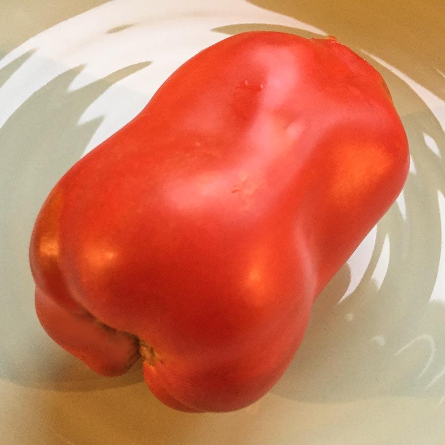 Rote Andine Cornue in der Größe einer Paprika