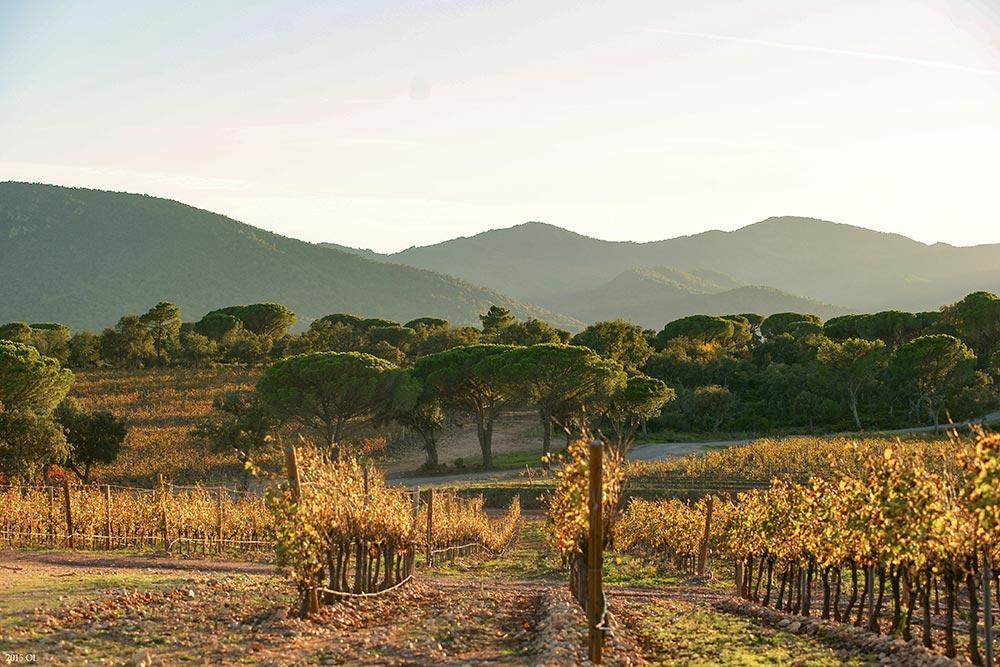Weinfelder am Massif-des-Maures
