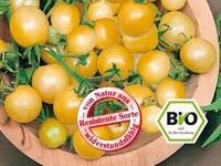widerstandsfähige Tomate Golden Currant