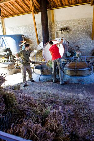 Lavendel-Destillerie