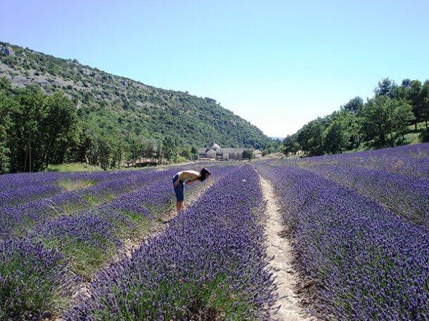 Provence Lavendelfeld @Fotolia